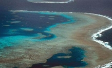 Bleaching on Great Barrier Reef more widespread than ever