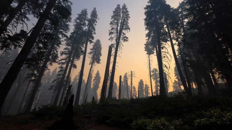 The pandemic slashed the West Coast's emissions. Wildfires already reversed it.No ratings yet.